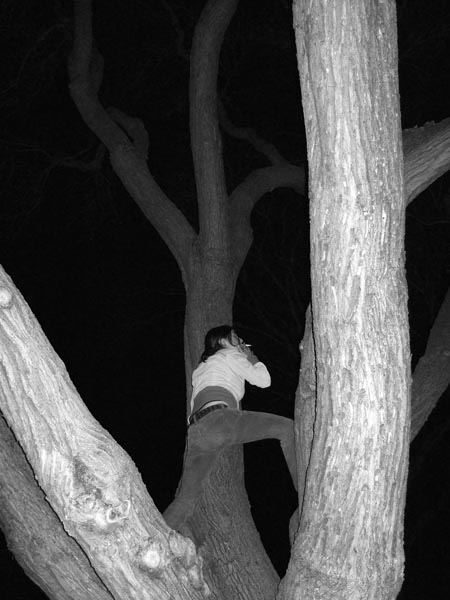 [Smoking in a Tree]