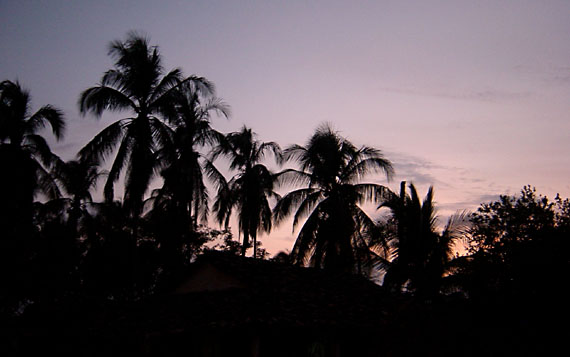 [Palm tree sunset]